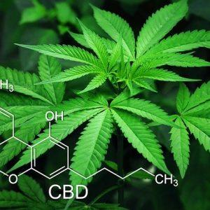 Image de fleur de cannabis avec la molécule de CBD